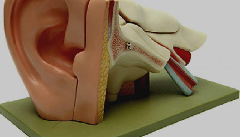 Nationale  Hoorstichting: voorkomen van gehoorschade