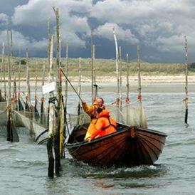 Waar zijn  de vissen? Actie nodig voor een robuuste Waddenzee