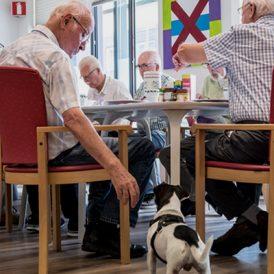 Door het OCD vertraagt het proces van dementie